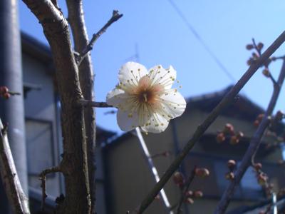 20080211_3.jpg